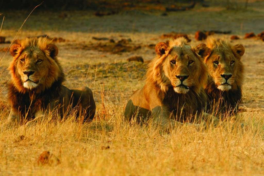 Botsuana - unberührte Wildnis