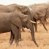 Tansania-Safari, Tarangire Nationalpark