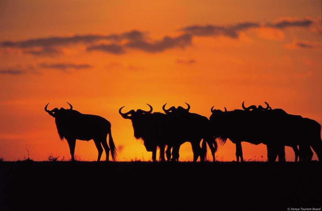 Kenia - Traumstrände und Safari