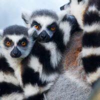 Der 6. Kontinent Madagaskar