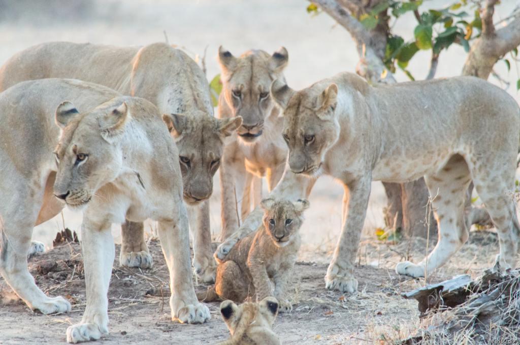 Sambia – Unberührtes Land im Süden Afrikas