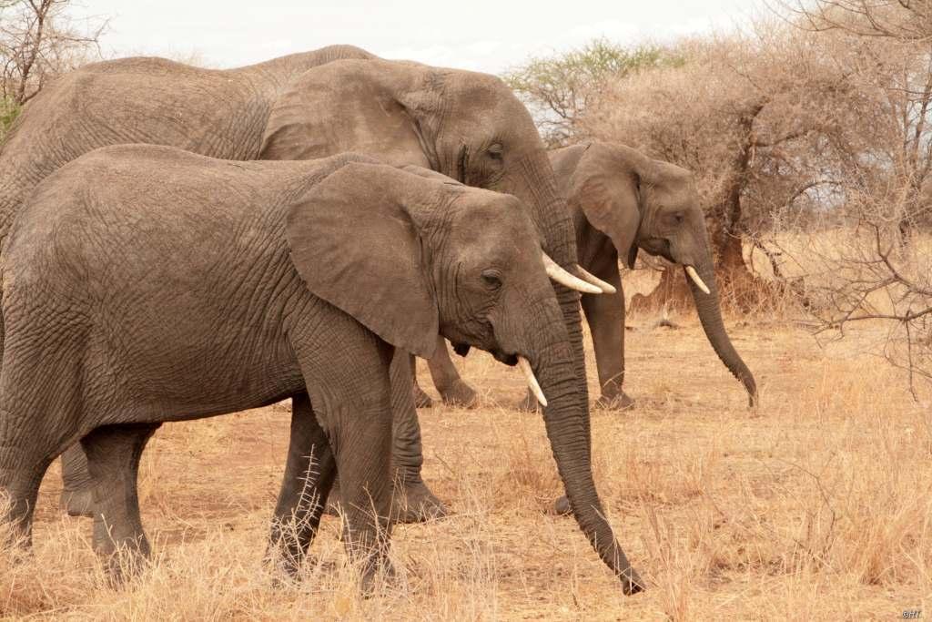 Tansania – Im Reich der Big Five und der Massai